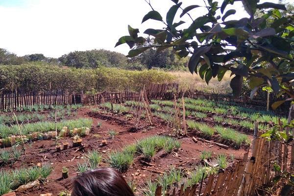 Projeto de extensão da UFGD leva caixas d'água e ferramentas para núcleo de produção agroecológica nas aldeias Jaguapiru e Bororó