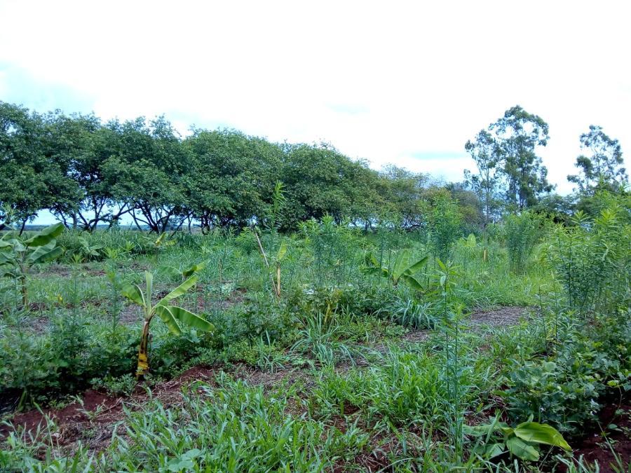 Sistema Agroflorestal na Unidade II